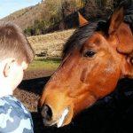 Dary dla konia Kubusia